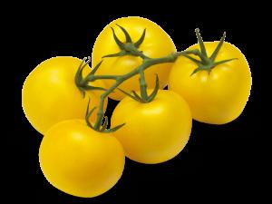עגבניות שרי צהובות