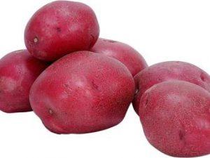 תפוח אדמה אדום תפזורת